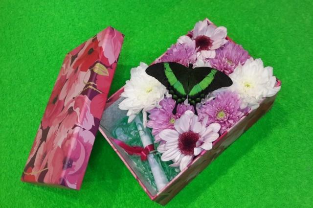 Бабочки прилетают в Тюмень в коробках.