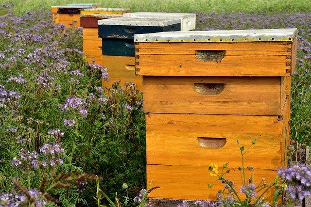 Пчеловодство, мед, пасека