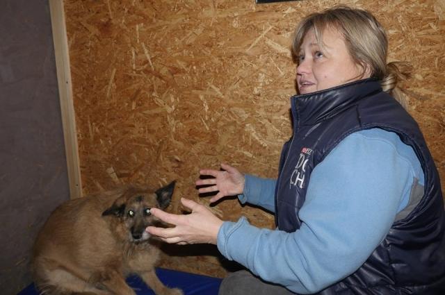 К волонтерам Фонда животные попадают по-разному и в разном состоянии. Многие из них, столкнувшись с жестоким обращением, начинают бояться людей.