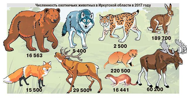 Численность охотничьих животных в Иркутской области в 2017 году