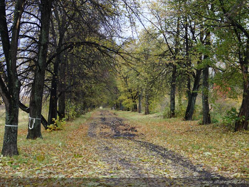 Барнаульский дендрарий осенью