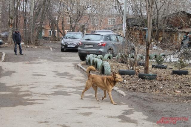 Крупные собаки из сгоревшей квартиры вырвались на улицу, но от дома не отходят