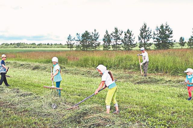 Дети собирают сено для лошадей. Они – новое  увлечение семьи.