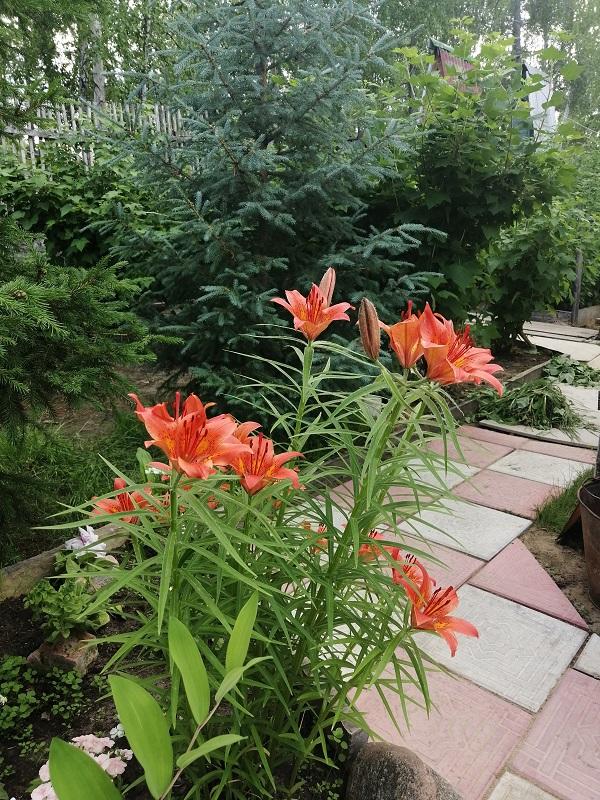 В других регионах с огородом мороки меньше: вскопали – посадили. В Якутии сложнее.