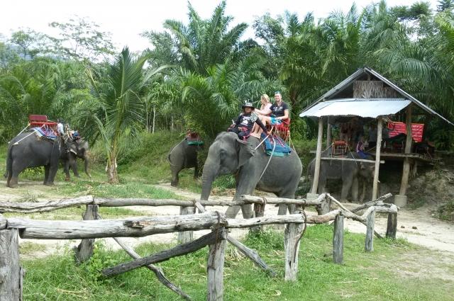Вести себя со слонами нужно осторожно.