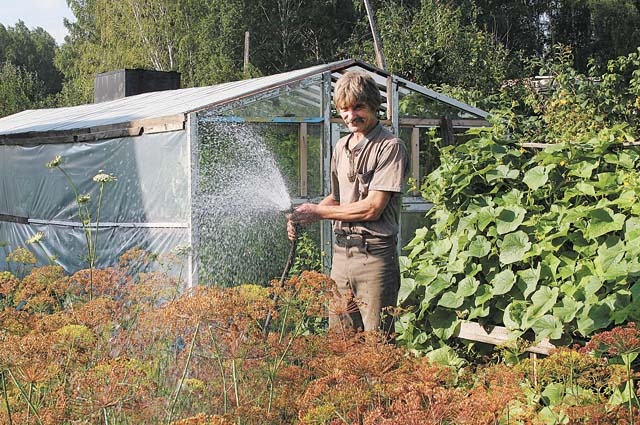 В жаркую погоду огород нужно постоянно поливать.