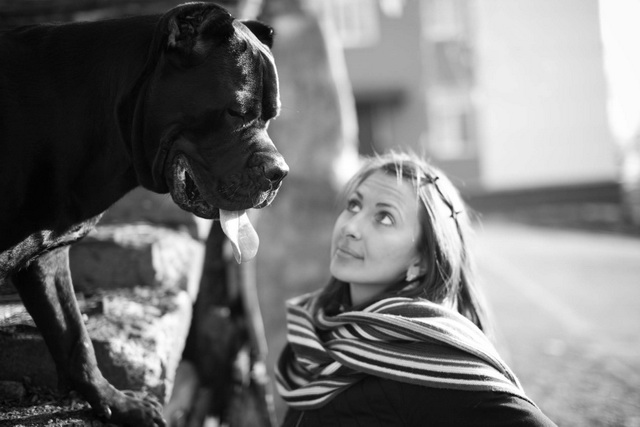 Плохим поведением пёс сигнализирует о своём дискомфорте.