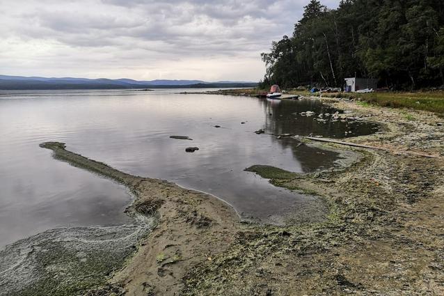 По отложениям на береговой линии видно, как вода цветет сине-зелеными водорослями