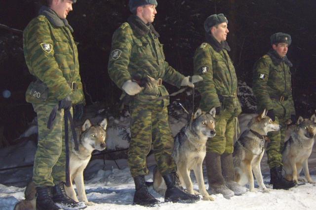 Многие волкособы успели прославиться и показать себя.
