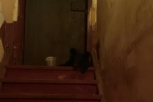 Малыш из тайги хорошо расположился в новом доме.