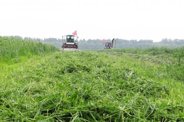 Смесь злаковых и бобовых культур скошена без проблем.