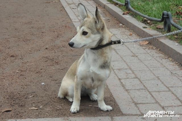 Благодаря соцсети хозяева собак знают, где их питомцы могут гулять в безопасности.