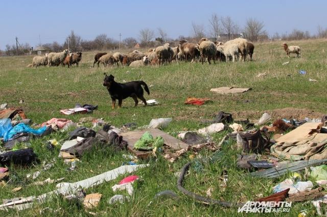 «Ничейные» земли со свалками выгодны жителям тем, что на них можно бесплатно пасти скот.
