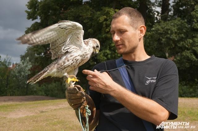 Вадим разводит хищных птиц уже несколько лет.
