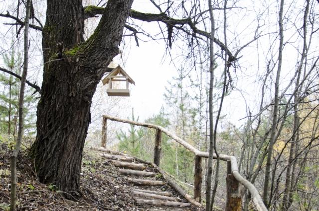 Увалы близ Екатерининского – чуть ли не самое высокое место в Омской области. Для удобства построены вот такие лестницы.