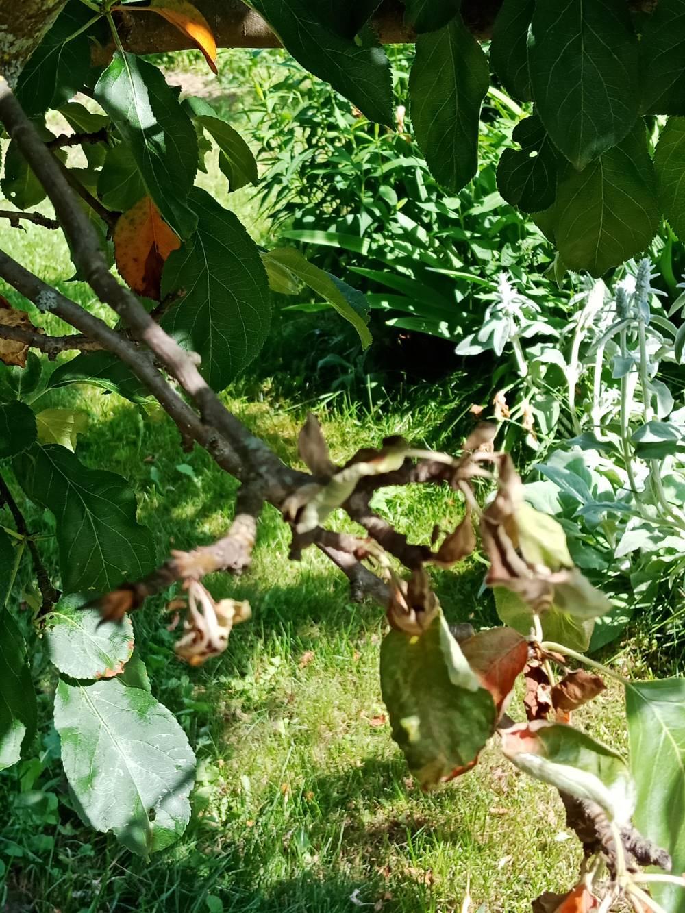 На здоровом дереве листва меняет цвет ближе к осени.