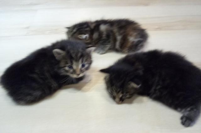 Из санузла котят достали спасатели.