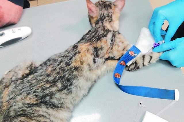 Замученные кошки попали в хороше руки.