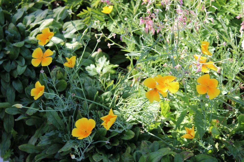 Некоторые цветы и растения Мешков привозил в свой сад издалека.