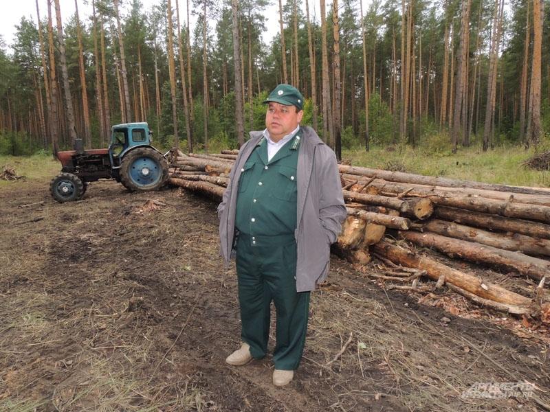 Мастера чистят лес от сухостоя