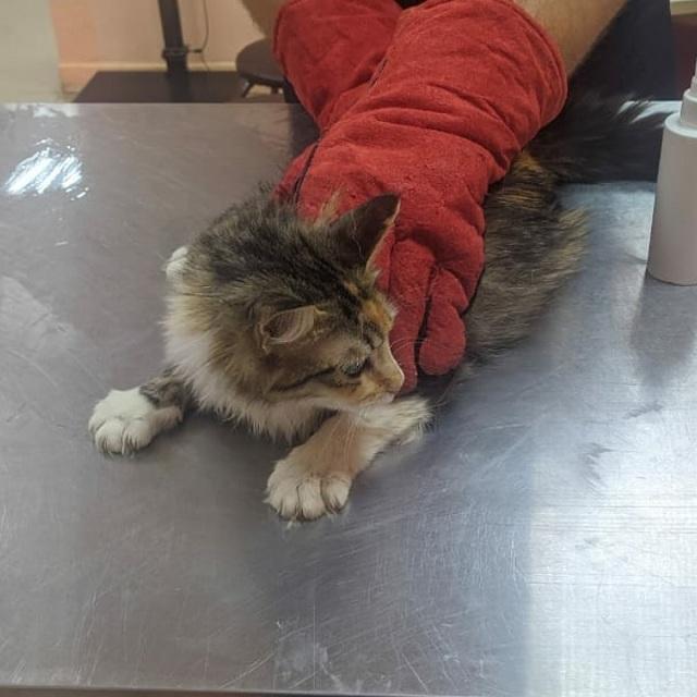 Сейчас кошки в клинике.