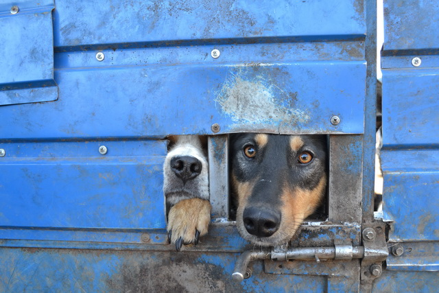 Приют для бездомных животных.
