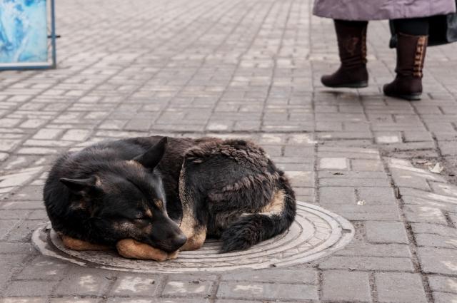Кстати, зимой количество бродячих собак резко увеличивается.