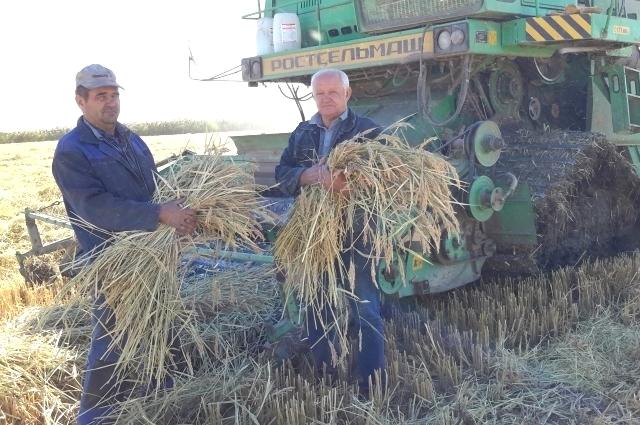 Обычно самую высокую урожайность давал сорт «Южанин», но в этом году лучше всех уродился «Флагман».