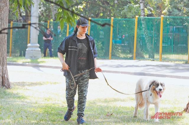 Прогулка с собакой по всем правилам.