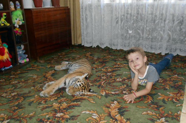 Тигрица Шанель жила у Ефремовых в прошлом году