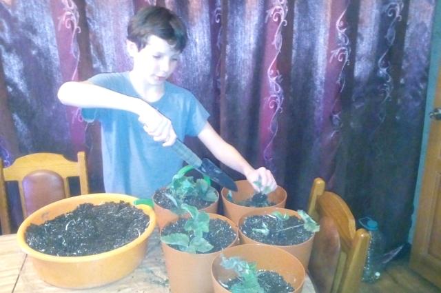 Ярцевы выращивают ягоду всей семьей.