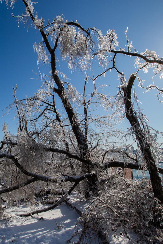 Выживут ли деревья?