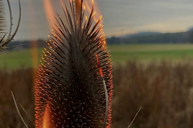 Так горят сорняки. Огонь сложно контролировать.