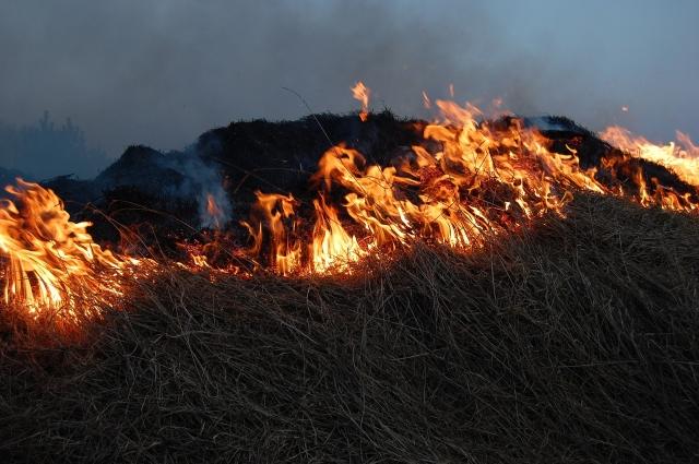 Сжигание прошлогодней травы часто приводило к лесным пожарам.