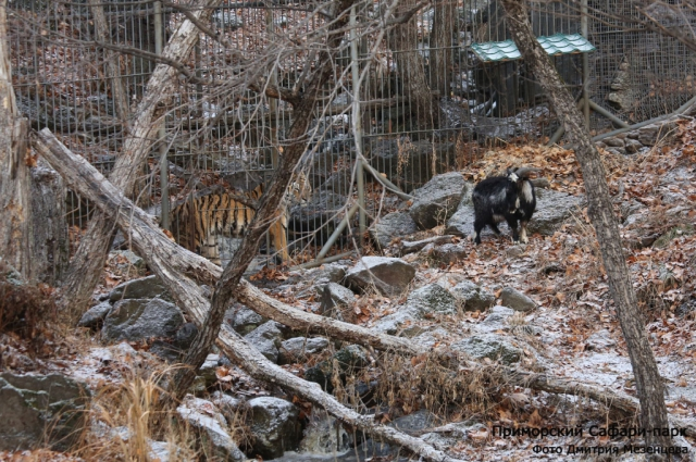 Тимур ожидает выхода Амура в большой парк.