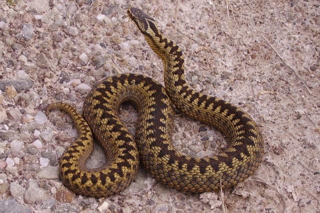 У змеи нет цели вас укусить.