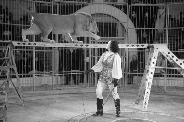 Артистка московского цирка Ирина Бугримова выступает на арене с дрессированными львами. 1957 год
