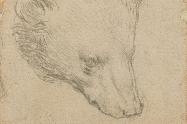 Набросок головы медведя, Леонардо да Винчи.