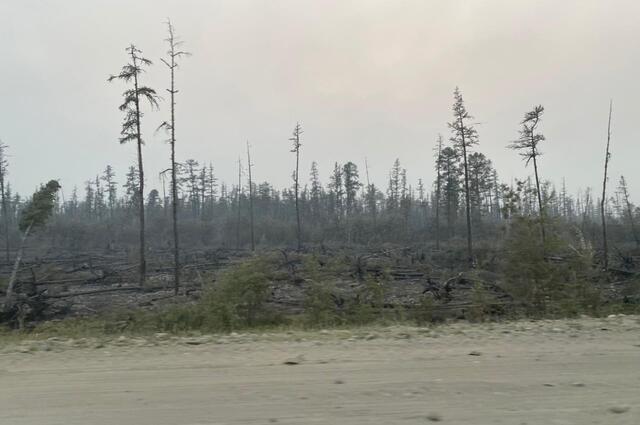 До пожаров в этой местности стоял густой лес.