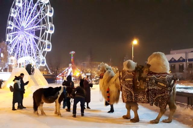 Верблюд Кеша на Цветном бульваре.