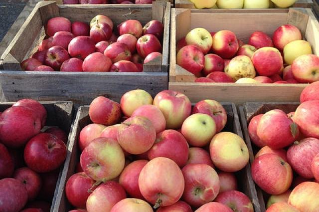 Для готовки подойдут обычные сезонные яблоки.