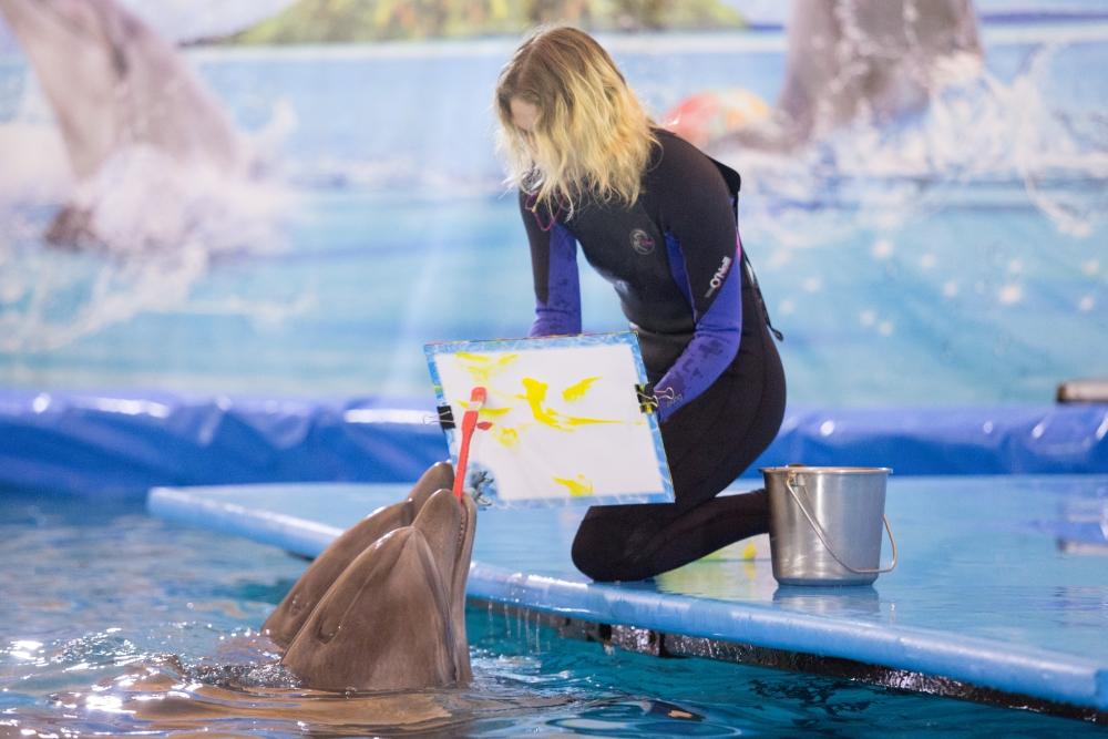Рисунок дельфина ушел с молотка за 2000 р.