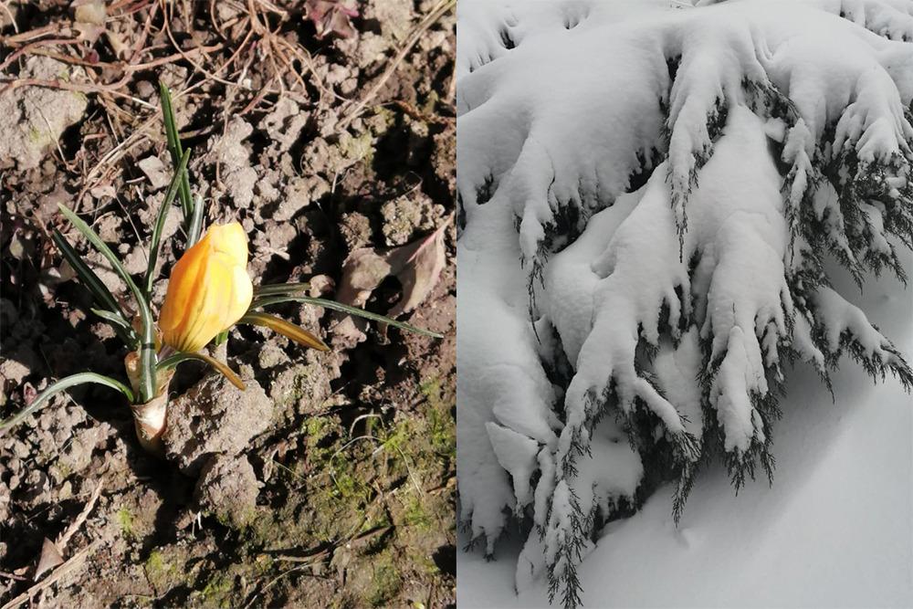 Фото одного и того же места сделано с разницей в сутки.