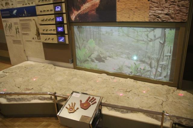 Плита, которой 225 млн лет.