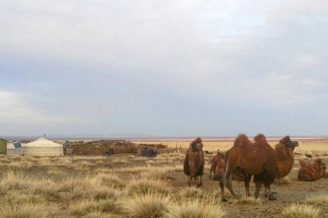 Характерный пейзаж монгольских степей.