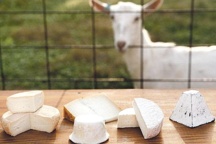 В планах - разводить коз и создать собственное производство козьего сыра.