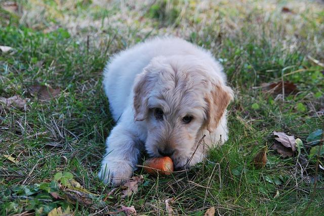 Некоторые собаки любят погрызть не только косточку.
