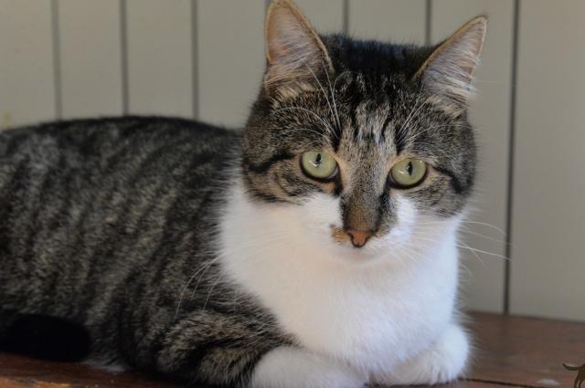 Хвостатый служащий Эрмитажа живет в Музее кошки уже 2 года.