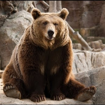 Медведь в зоопарке санатория