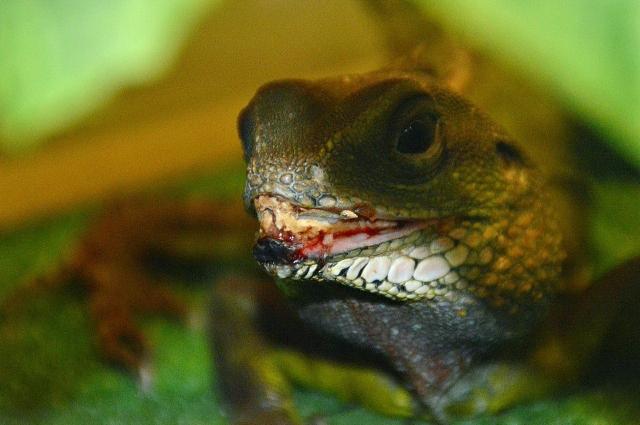 В интернете многие люди жалуются на болезненный вид животных, которые содержатся в зоопарке Анапы.